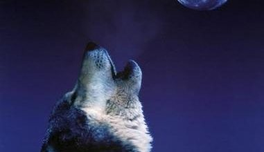 wolfHowlingWolfC100573501