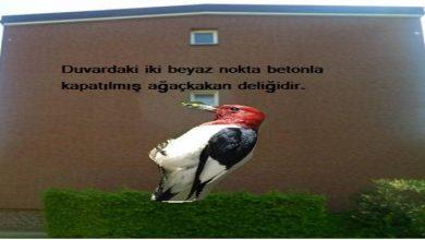 Photo of Kuş işi, bilmez kişi