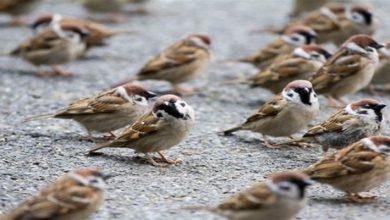 Photo of Türk devletinin yeni kuş tuzağı